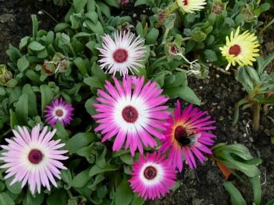 Gartenpflanzen - Aussehen Und Bezeichnung Seite 1